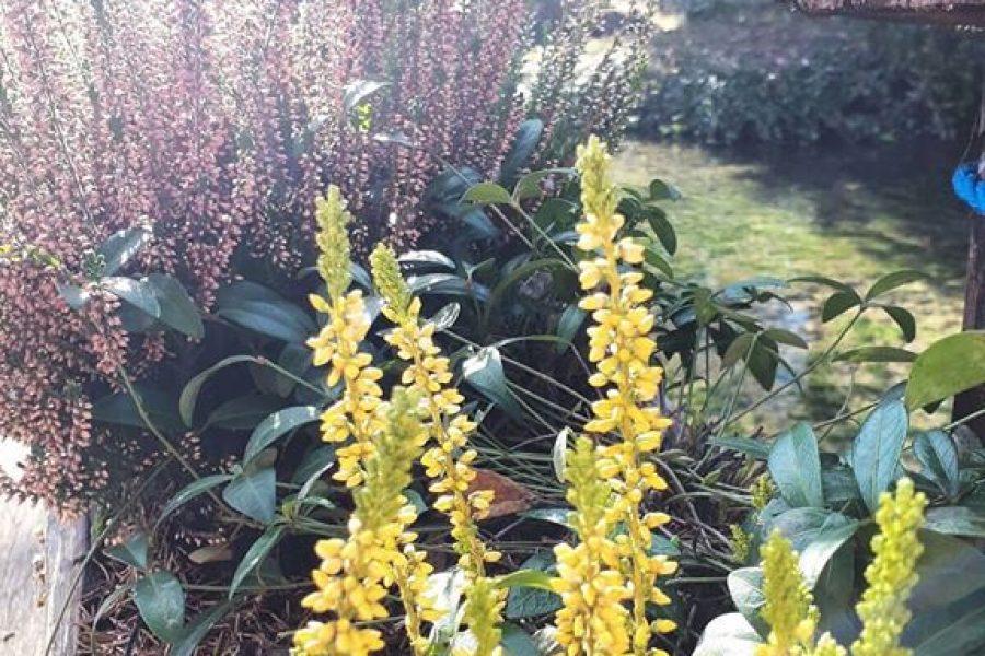 Par dana (pre)toplog vremena i naše su biljke pokazale svoje najljepše lice! Bojimo se…