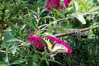 Make your garden butterfly friendly