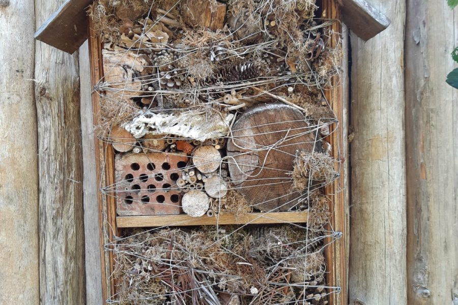 What's an bug hotel and how do I make one?