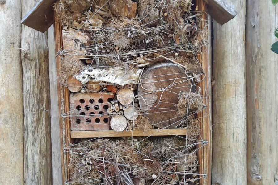 Što je hotel za kukce i kako ga napraviti?
